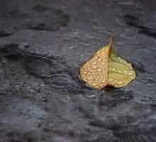 Rainy Autumn Day by Gilda Axelrod