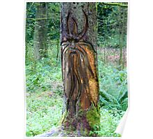 Tree carving Poster