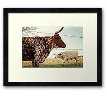 Texas Longhorn Cattle Framed Print