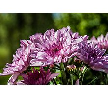 Sweet Mums Photographic Print