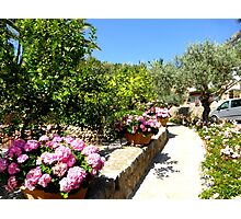 The Rose And Hydrangea Path Photographic Print