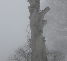 Dead Tree in the Fog by Gilda Axelrod