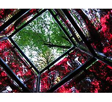 square cube of nature Photographic Print