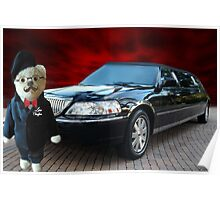 Teddy Bear Limousine Chauffeur Card/Picture Poster