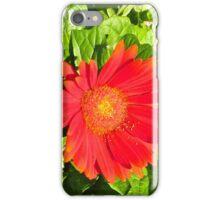 Zinnia - k6046 iPhone Case/Skin