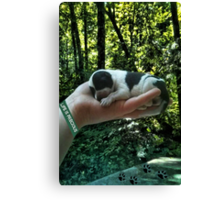 I LEFT FOOTPRINTS IN YOUR HEART EVEN WHILE IM SLEEPING>>LIFE IS PRECIOUS>>DOG -CANINE PICTURE AND OR CARD EC. Canvas Print