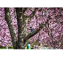 Blue Jay Among the Pink Photographic Print