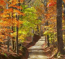 Sunny Fall Day by Ginny York
