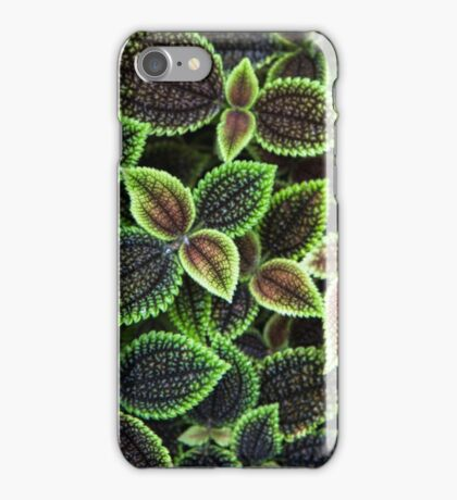Leaves Texture iPhone Case/Skin