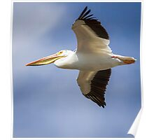 Flight Of The American White Pelican Poster