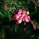 Spring Grevillea by Lozzar Flowers & Art