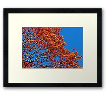 The Flames of Autumn Framed Print