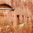 3.10.2014: Rusty Door and Plants by Petri Volanen