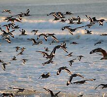 Shorebirds and Surf by DWMMPhotography