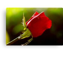 one rose, one love, one heart Canvas Print