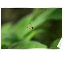 Invisible spider web Poster