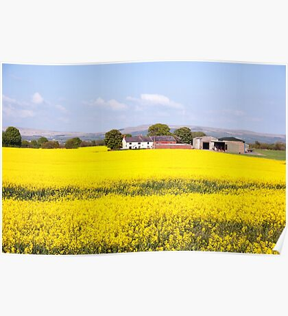 A Farm in a Sea of Yellow Oil Seed Rape Poster