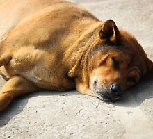 Street Dogs of Asia Series - Vietnam - Mixed Breed by designedbyn