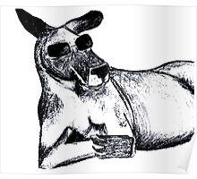Cool Kangaroo Poster