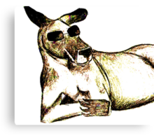 Cool Kangaroo (Colour) Canvas Print