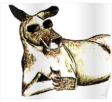 Cool Kangaroo (Colour) Poster
