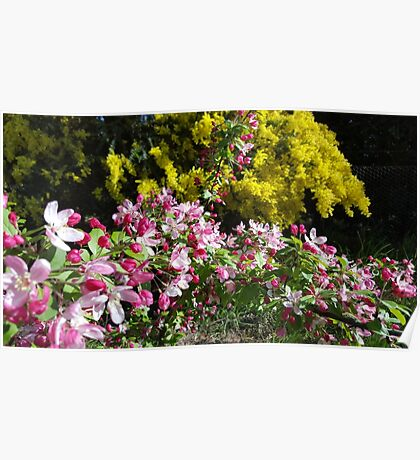 Blossom and Wattle Poster