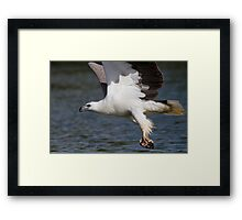 The Eagle Thief Framed Print
