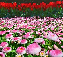 Tulip Top Gardens  by candysfamily