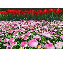 Tulip Top Gardens  Photographic Print