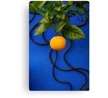Blue wall orange fruit Canvas Print