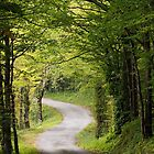 The road under the trees by Patrick Morand
