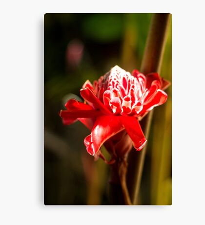 Red Flower - Macro Photography Canvas Print