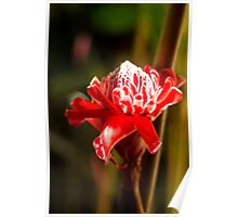 Red Flower - Macro Photography Poster