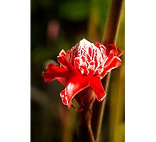 Red Flower - Macro Photography Photographic Print