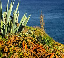 Cypress Sea Coast - Nature Photography by JuliaRokicka