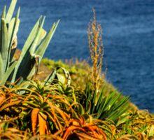 Cypress Sea Coast - Nature Photography Sticker