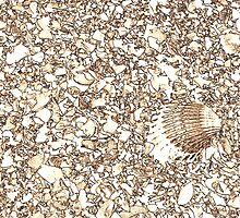 shells on the beach by spetenfia