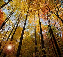 November Gold by James Hoffman