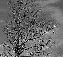 Desolate by ishotit4u