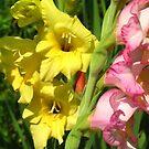 Gladiola flowers by Maria1606