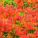 Autumn Bliss by jules572