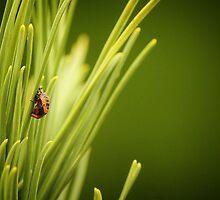Ladybug Larva by Tracy Friesen