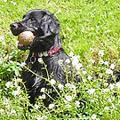 My Ball, I'm Wet and I like it! by CreativeEm