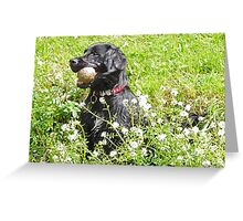 My Ball, I'm Wet and I like it! Greeting Card