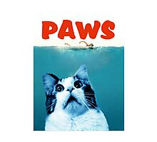 PAWS Photographic Print