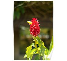 Bird Flower - Nature Photography Poster