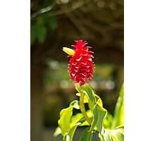Bird Flower - Nature Photography Photographic Print