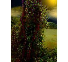 Adorned in Autumn Photographic Print