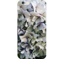 Hydrangea Heaven iPhone Case/Skin