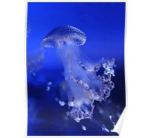 The Beauty of A Blue Jellyfish Poster